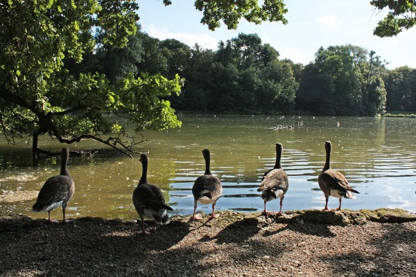 Прогулки по Мюнхену: Нюмфенбург, Зоопарк