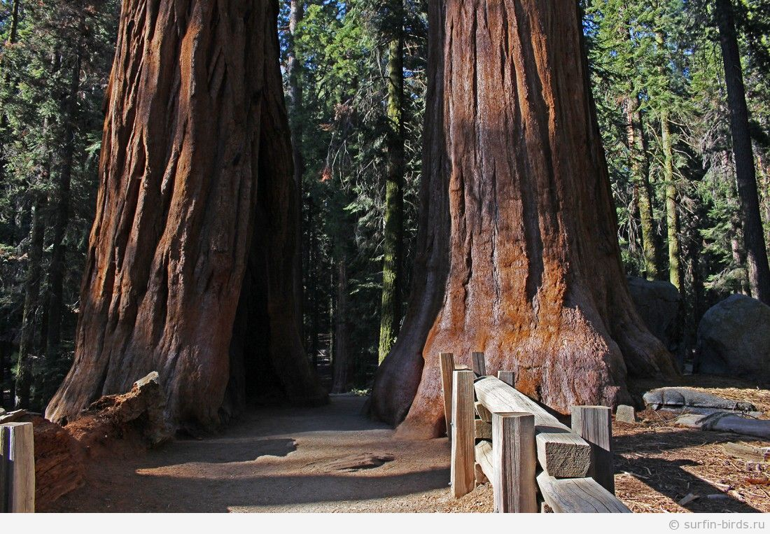 Едем в Sequoia National Park. Часть 6