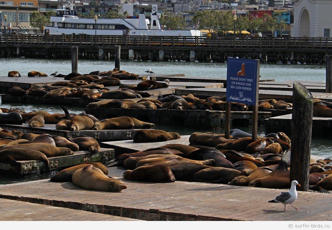 Сан Франциско. Часть 13. Пирc 39 и морские котики